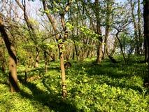 Foresta verde della primavera fotografia stock libera da diritti