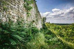 Foresta verde della vegetazione intorno ad una parete di pietra Fotografia Stock Libera da Diritti