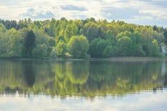 Foresta verde di estate e la sua riflessione nel lago Fotografia Stock