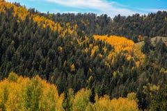 Foresta verde e gialla sul pendio di collina fotografia stock libera da diritti