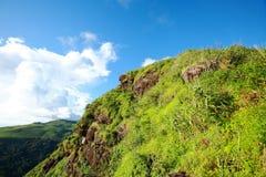 Foresta verde ed alta montagna Fotografia Stock Libera da Diritti