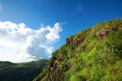 Foresta verde ed alta montagna Immagine Stock