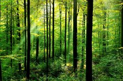 Foresta verde fresca immagine stock