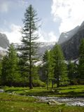 Foresta verde incantata Fotografia Stock Libera da Diritti