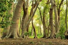 Foresta verde magica Fotografia Stock