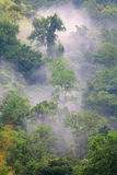 Foresta verde in mattina nebbiosa Fotografie Stock Libere da Diritti