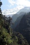 Foresta verde, montagna dello Snowy Immagine Stock Libera da Diritti