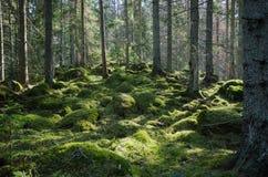 Foresta verde muscosa Immagine Stock