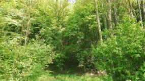 Foresta verde nel tempo di molla dovuto del sud della Repubblica federale di Germania fotografia stock libera da diritti