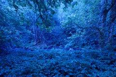 Foresta verde nell'ambito della luce di luna di notte lush immagine stock