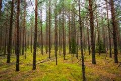 Foresta verde, ora legale Fotografia Stock