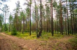 Foresta verde, ora legale Fotografie Stock