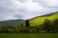 Foresta verde sulla valle di Sadu Fotografia Stock