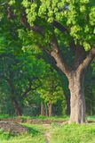Foresta verde variopinta Immagine Stock
