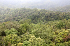 foresta vergine Fotografia Stock Libera da Diritti