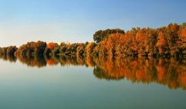 Foresta verso la fine di ottobre Immagini Stock