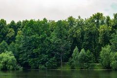 Foresta vicino ad uno stagno Immagini Stock Libere da Diritti