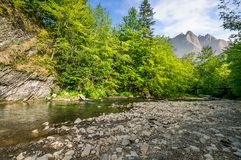 Foresta vicino al fiume in montagne Fotografia Stock Libera da Diritti