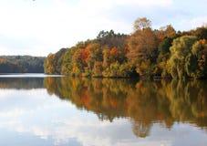 Foresta vicino al lago Immagini Stock Libere da Diritti