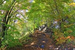 Foresta vicino alla città Ruzomberok Fotografie Stock