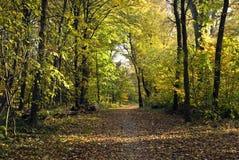 Foresta-vicolo d'autunno Fotografia Stock Libera da Diritti