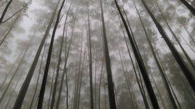 Foresta vuota Fotografie Stock Libere da Diritti