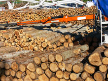 Forestal production Royalty Free Stock Image