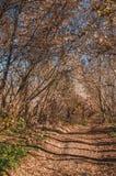 Forestalley misturado do outono fotografia de stock