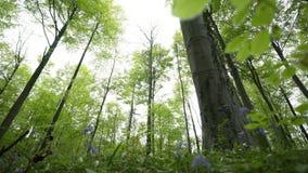ForestBottom-Ansicht zwischen Blätter stock video footage