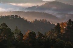 Foreste Fotografie Stock