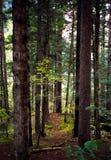 Foreste Immagine Stock Libera da Diritti
