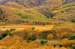 Foreste Fotografie Stock Libere da Diritti