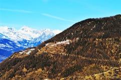 Foreste in alpi svizzere Fotografia Stock