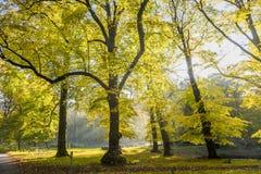 Foreste con gli alberi di faggio maturi nella proprietà Groenendaal del paese anziano Immagine Stock