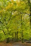 Foreste con gli alberi di faggio maturi nella proprietà Groenendaal del paese anziano Fotografia Stock