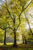 Foreste con gli alberi maturi della spiaggia e della calce nella proprietà Groenendaal del paese anziano Fotografia Stock