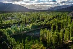 Foreste con la montagna in Leh Ladakh, il Jammu e Kashmir, India immagine stock libera da diritti