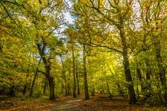 Foreste con le querce mature nella proprietà Groenendaal del paese anziano Fotografia Stock
