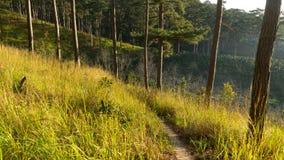 Foreste dei pini e vetro giallo Fotografie Stock
