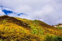 Foreste del pino alla base di Jade Dragon Snow Mountain Immagini Stock Libere da Diritti