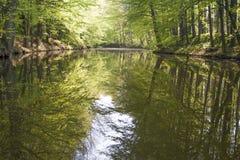 Foreste del terreno alluvionale Fotografie Stock Libere da Diritti