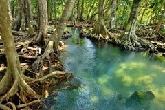 Foreste della mangrovia Immagini Stock Libere da Diritti