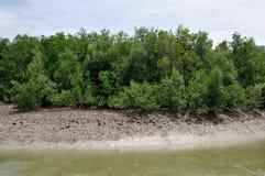 Foreste della mangrovia Fotografie Stock Libere da Diritti