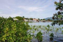 Foreste della mangrovia Fotografia Stock