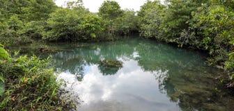 Foreste della mangrovia Fotografie Stock