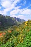 Foreste della montagna con colore Fotografia Stock Libera da Diritti