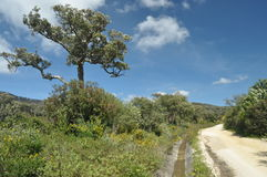 Foreste della quercia da sughero nelle montagne Fotografia Stock Libera da Diritti