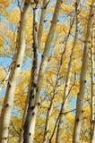 Foreste di autunno Immagine Stock
