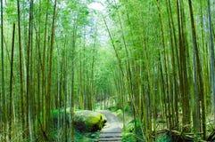 Foreste di bambù Fotografia Stock Libera da Diritti