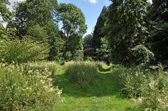 Foreste di estate nella campagna britannica Immagine Stock